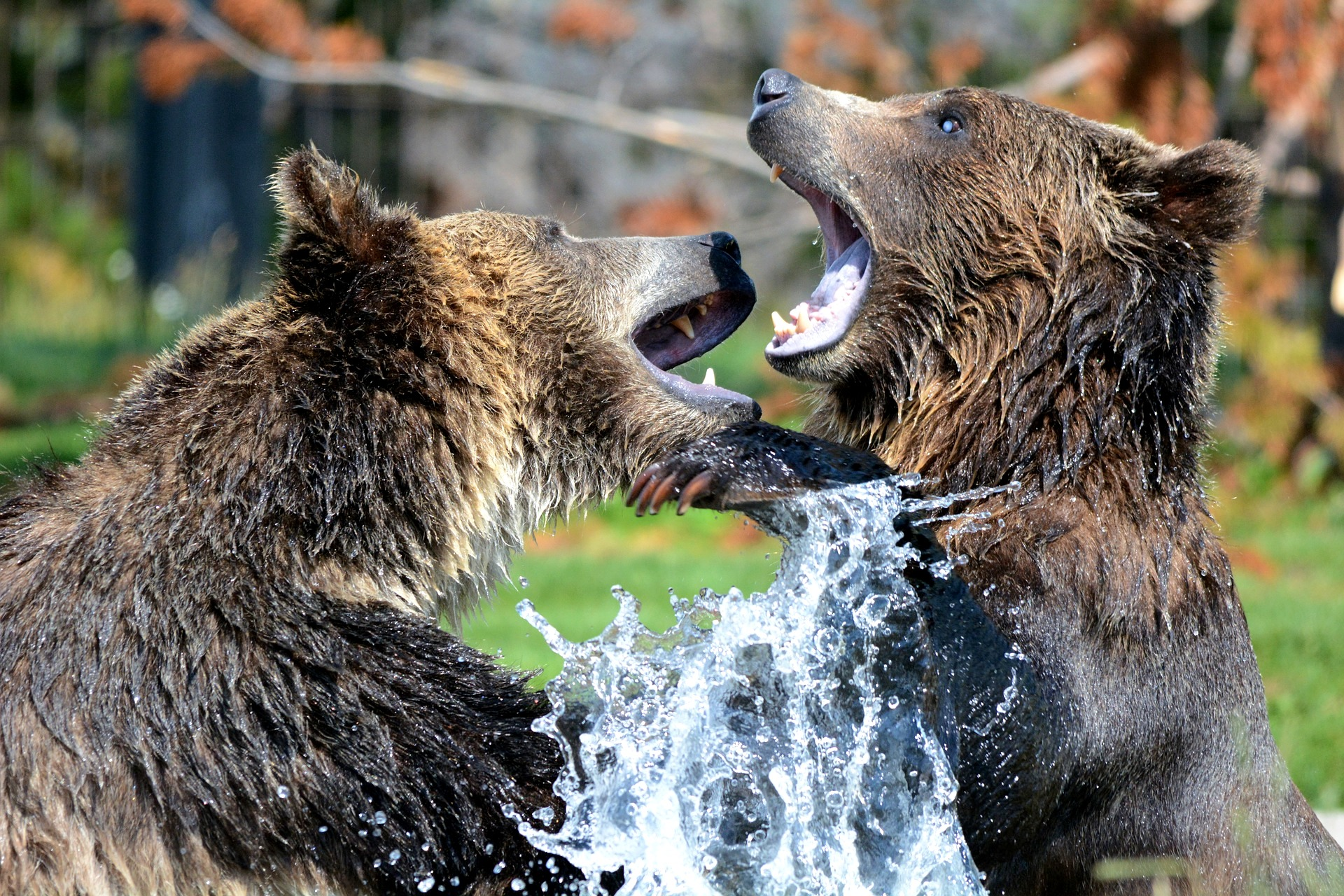 bears, zoo, animal, nature, czech republic, beroun, fun out of prague